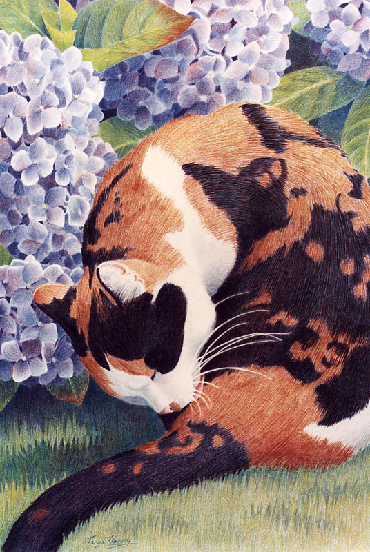 613 Calico and Hydrangea*
