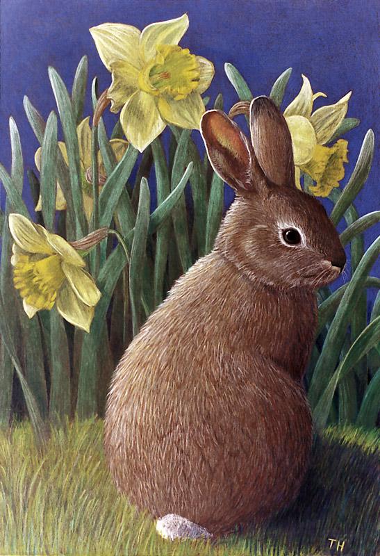 301 Rabbit & Daffodils
