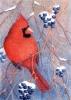 103 Winter Cardinal*