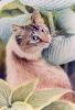 614 Cat & Hosta