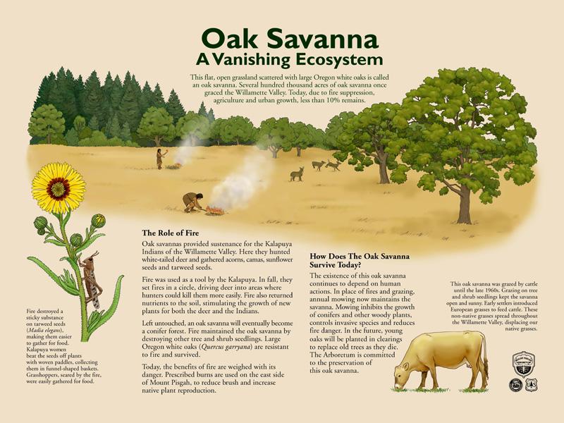 Oak Savanna Interpretive Sign