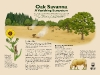 Oak Savanna Interpretive Sign