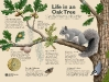 Life in the Oak Tree Interpretive Sign